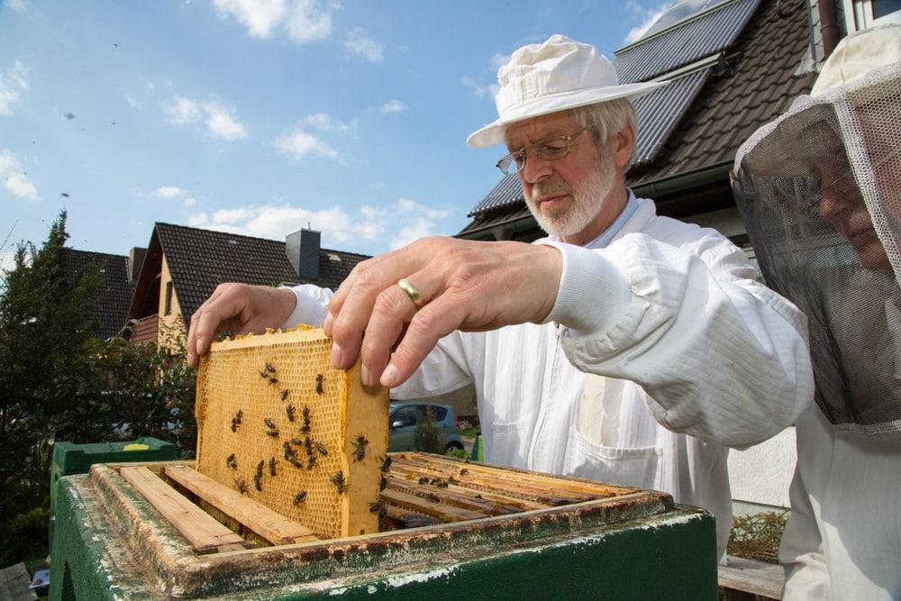 beekeeper with beehive board