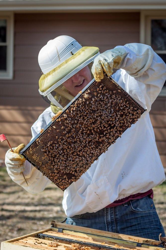 full hive board