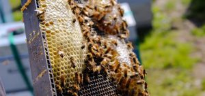 honey hive board
