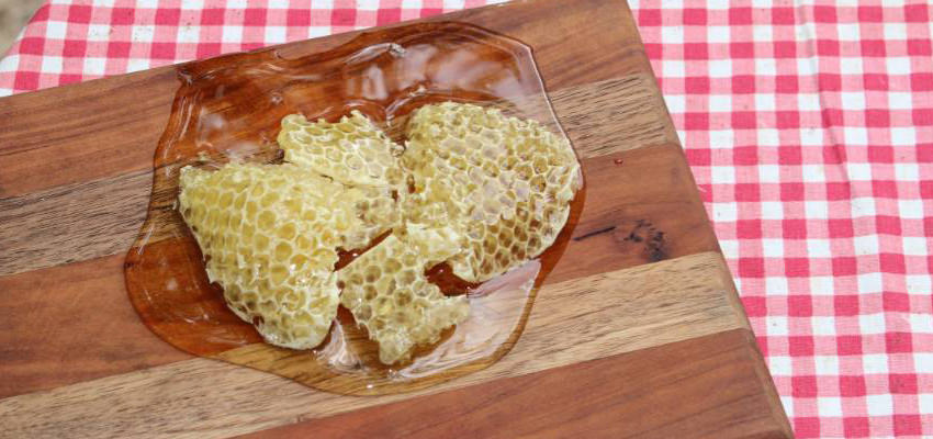 do bumble bees make honey