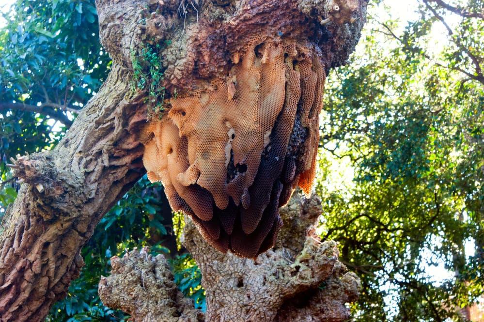 natural bee hive