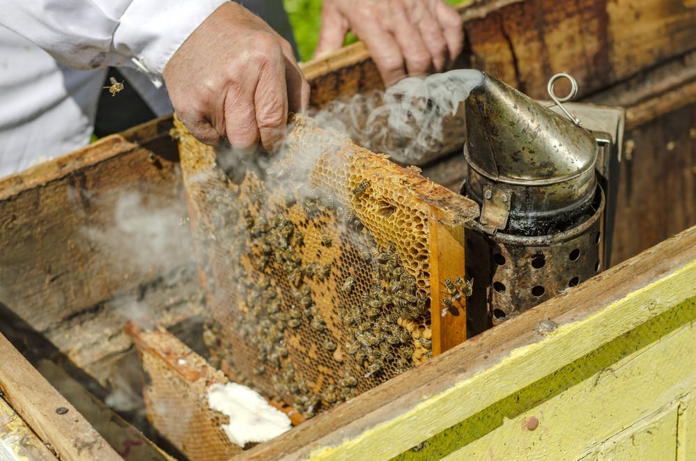smoking beehive