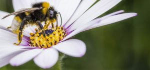 What Flowers Do Bees Like