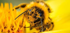 Pollination Process of a Bee