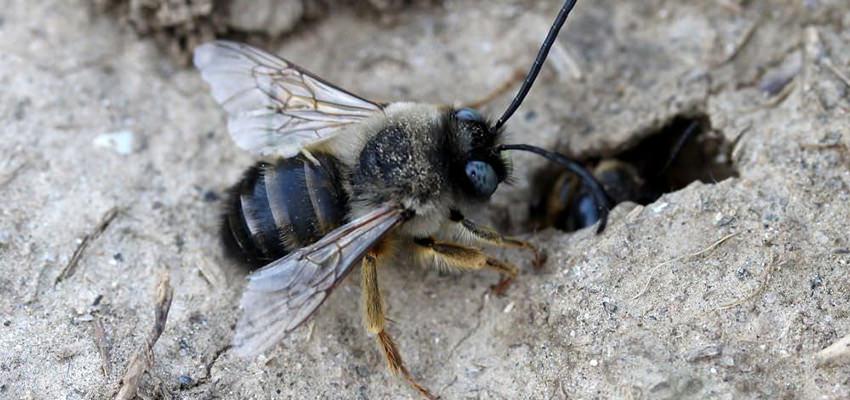 do bees hibernate