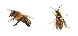 honey bees vs yellow jackets