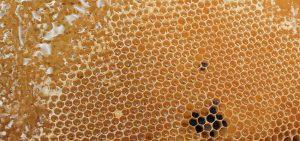 Do All Bees Make Honey