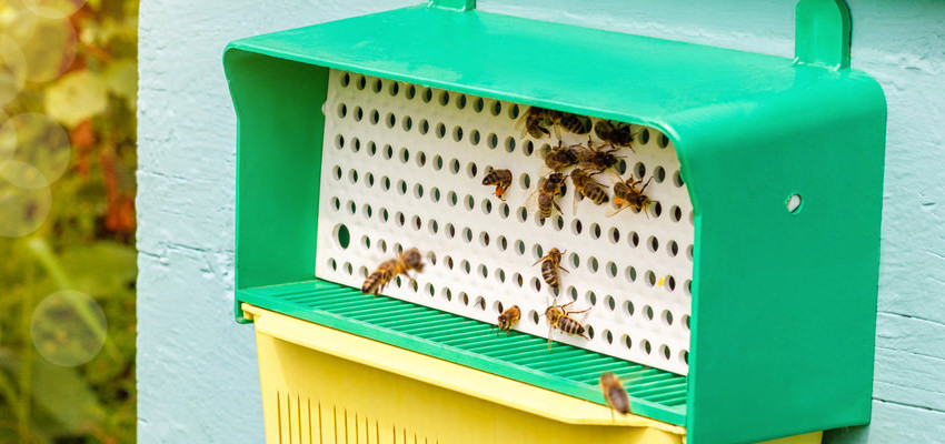 how to use pollen traps