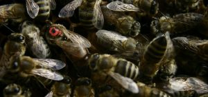 How Long Do Queen Bees Live