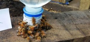 how to use a bee feeder