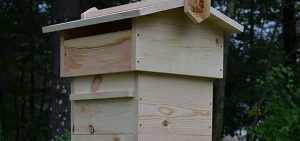 warre hives