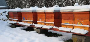 where do bees go in the winter