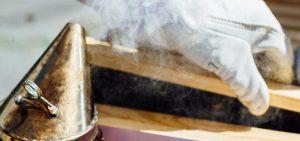 beekeeping starter kits