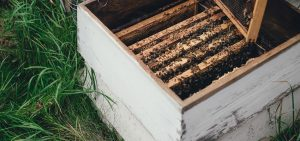 best bee hive boxes